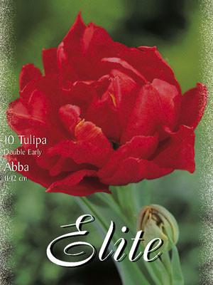 Gefüllte frühe Tulpe 'Abba' (Art.Nr. 595150)