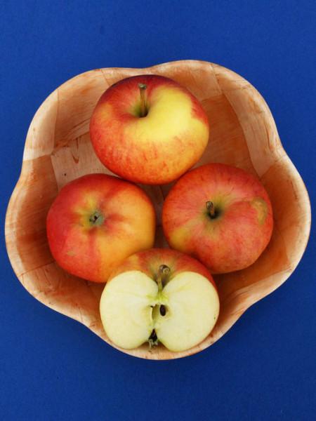 Obstschale mit dem Apfel 'Gala'