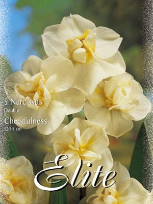 Mehrblütige Narzisse 'Cheerfulness' (Art.Nr. 595910)