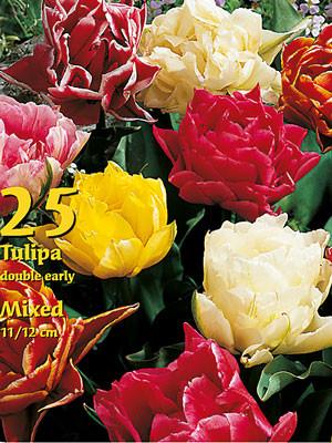 Gefüllte Tulpen-Prachtmischung (Großpackung) (Art.Nr. 597536)
