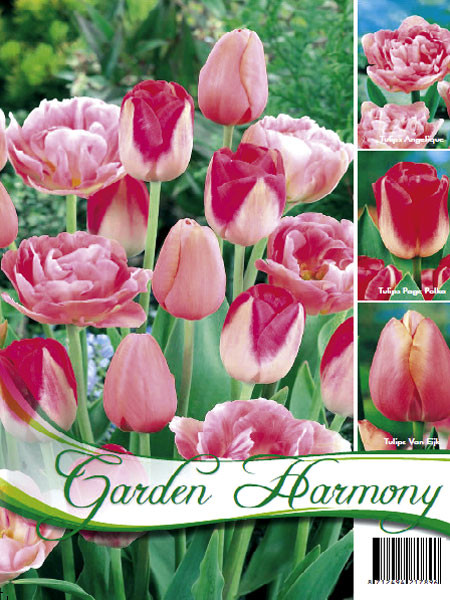 Kollektion rosa Tulpen (Art.Nr. 598206)