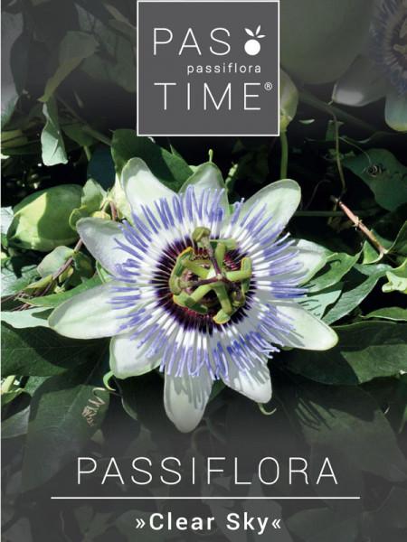 Passionsblume 'Clear Sky', Passiflora