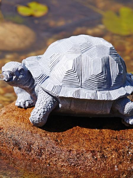 Wasserspeier Schildkröte seitlich