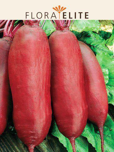 Rote Rübe 'Cylindra' (Art.Nr. 21410)