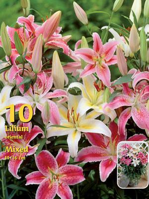 Orientalische Lilien-Hybriden, Mischung, Lilium (Art.Nr. 522396)