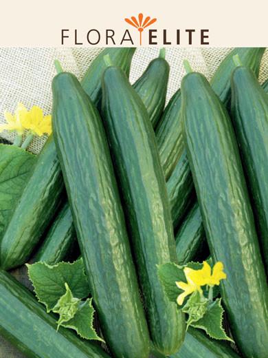 Salatgurke 'Saladin F1' (Art.Nr. 21150)