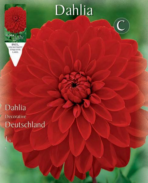 Schmuck-Dahlie 'Deutschland', Dahlia (Art.Nr. 5201395)