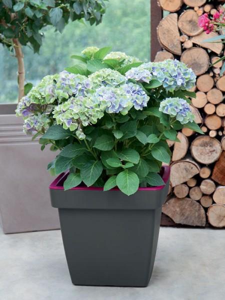 Pflanzkübel E&K Bicolor eckig bepflanzt