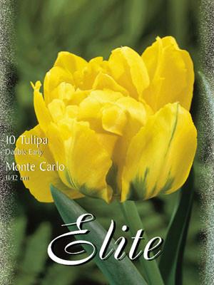 Gefüllte frühe Tulpe 'Monte Carlo' (Art.Nr. 595162)
