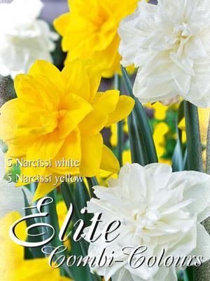 Edle Farbkombination mit gefüllten Narzissen in den Farben Weiß und Gelb (Art.Nr. 598017)