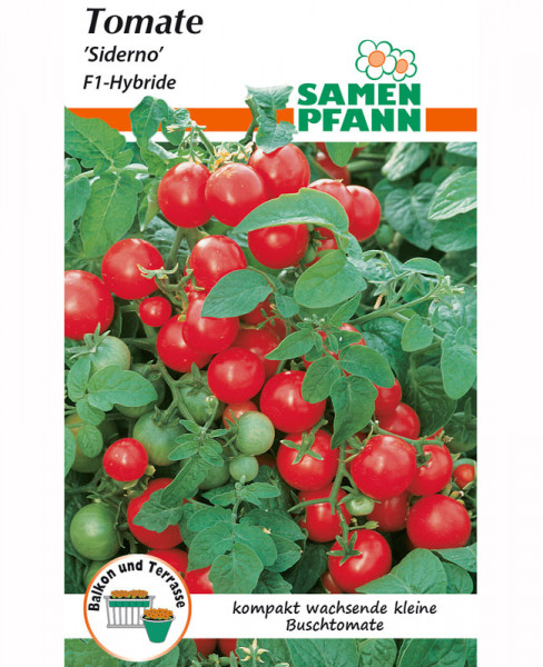Tomate 'Siderno' - F1-Hybride (Art.Nr. G872)