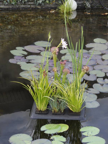 Floating Plant Oasis mit Bepflanzung