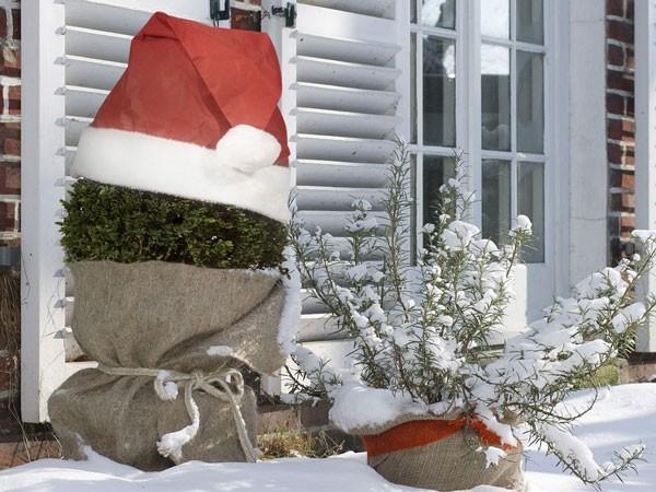 Pflanzen-Weihnachtsmütze