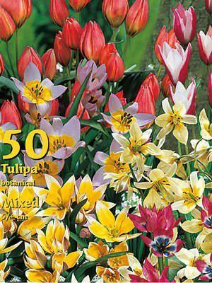 Botanische Tulpen-Prachtmischung (Großpackung) (Art.Nr. 597854)