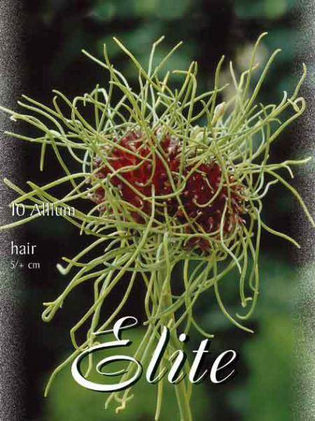 Allium 'Hair' (Art.Nr. 596308)
