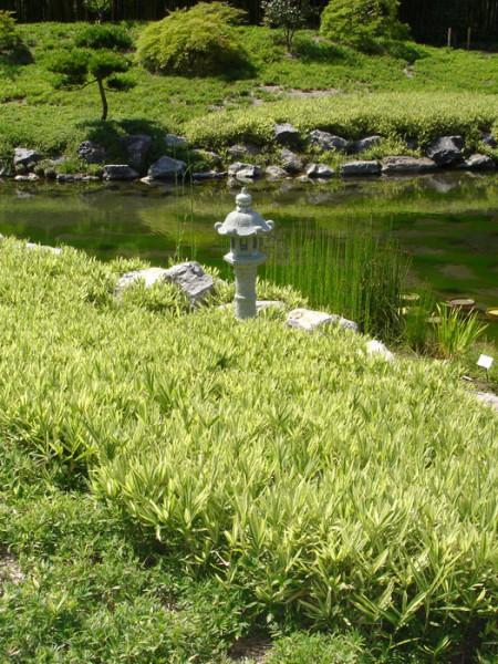 Silverstreifenbambus japanischer Garten