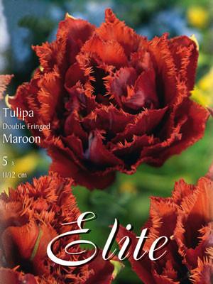 Gefüllte gefranste Tulpe 'Maroon' (Art.Nr. 595535)