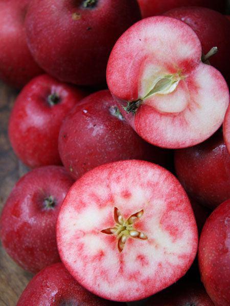 Fruchtfarbe Apfel Rosette