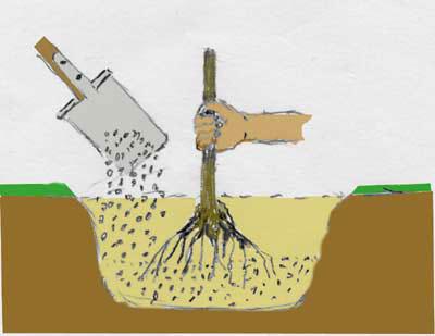 zeichnung-pflanzung-1