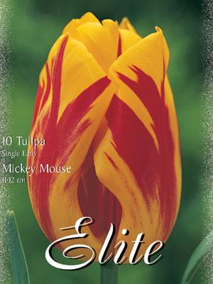 Einfache frühe Tulpe 'Mickey Mouse' (Art.Nr. 595112)
