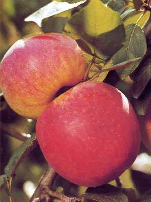 Apfel Jamba
