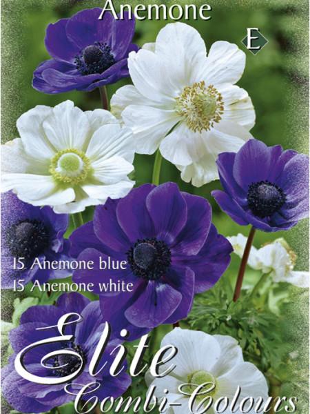 Anemone De Caen, Blau und Weiß, Anemone coronaria (Art.Nr. 520751)