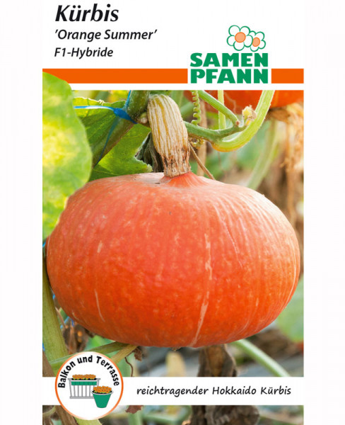 Hokkaido-Kürbis 'Orange Summer' - F1-Hybride (Art.Nr. G503)