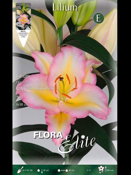 Orientalische Lilien-Hybride 'Captain Tricolore', Lilium (Art.Nr. 521735)