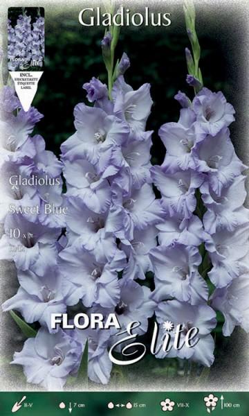Gladiole 'Sweet Blue', Gladiolus (Art. Nr. 521312)