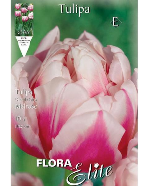 Gefüllte frühe Tulpe 'Melrose' (Art.Nr. 595157)