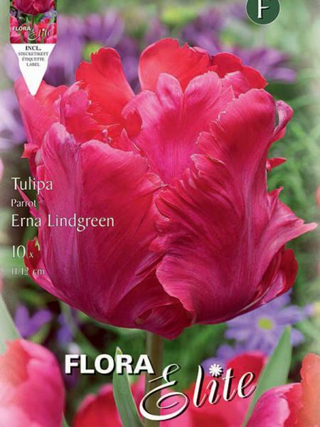 Tulpe Erna Lindgreen