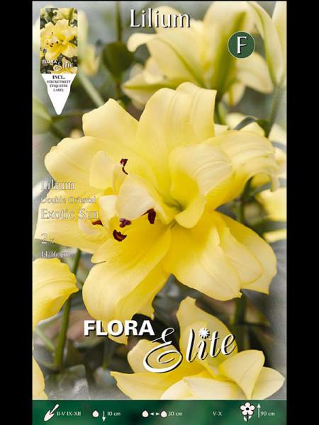 Orientalische Lilien-Hybride 'Exotic Sun', Lilium (Art.Nr. 521736)