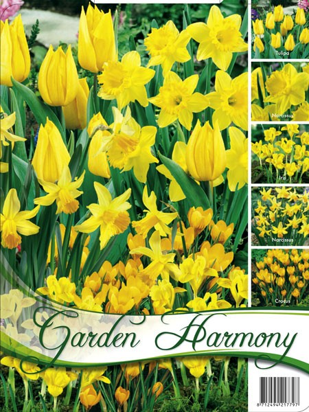 Edle Farbkombination 'Gelber Garten' (Art.Nr. 598245)