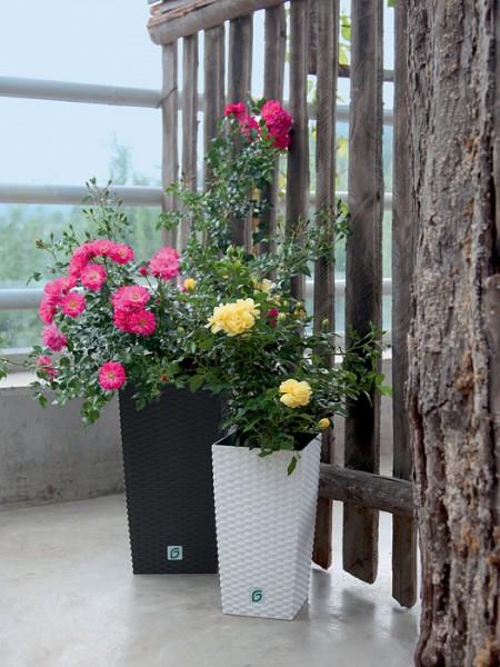 Pflanzkübel Rato Square bepflanzt
