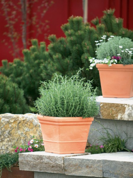 Pflanzkübel Parma bepflanzt