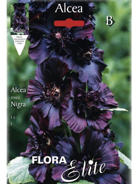 Stockrose rosea 'Nigra', Alcea (Art.Nr. 520720)