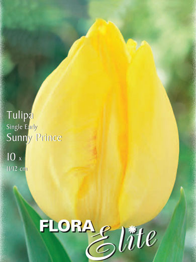 Einfache frühe Tulpe 'Sunny Prince' (Art.Nr. 595124)
