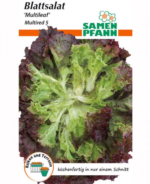 Pflücksalat 'Multired 5' (Art.Nr. G776)