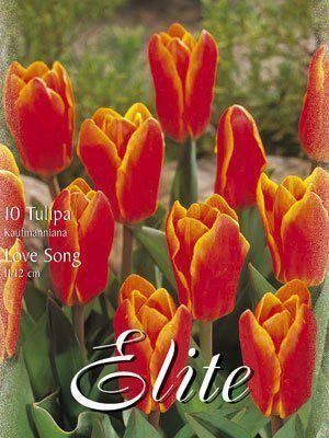 Kaufmanniana-Tulpe 'Love Song' (Art.Nr. 595836)