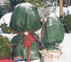 winterschutz-fuer-pflanzen