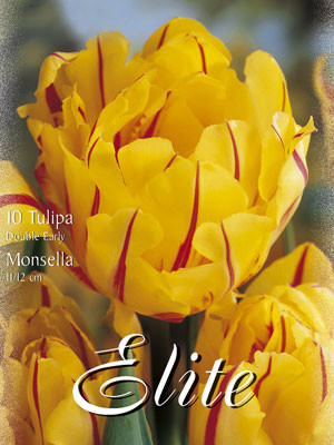 Gefüllte frühe Tulpe 'Monsella' (Art.Nr. 595158)