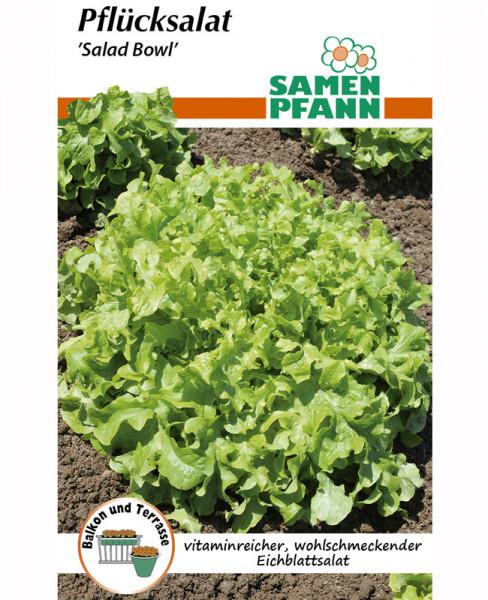 Pflücksalat 'Salad Bowl' (Art.Nr. G780)