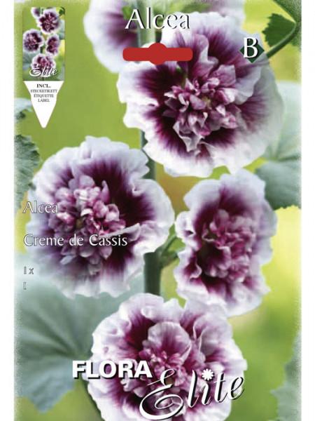 Stockrose 'Creme de Cassis', Alcea (Art.Nr. 520718)