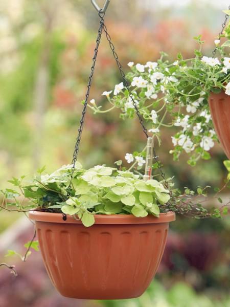 Hängeampel Casa Flor bepflanzt