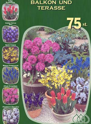 Sortiment Blumenzwiebeln für Balkon und Terrasse (Art.Nr. 598208)