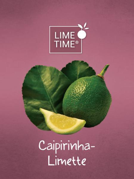 Limettenbaum 'Caipirinha-Limette' - Lime Time®