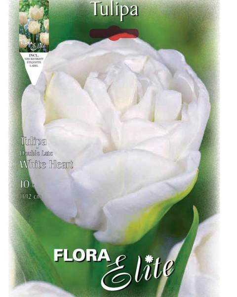 Gefüllte späte Tulpe 'White Heart' (Art.Nr. 595419)