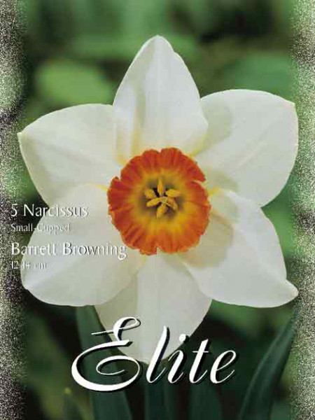 Kleinkronige Narzisse 'Barrett Browning' (Art.Nr. 595972)