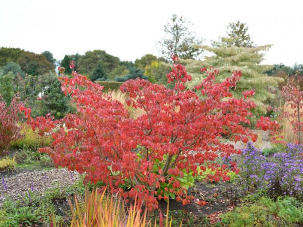 malerische Herbstfärbung