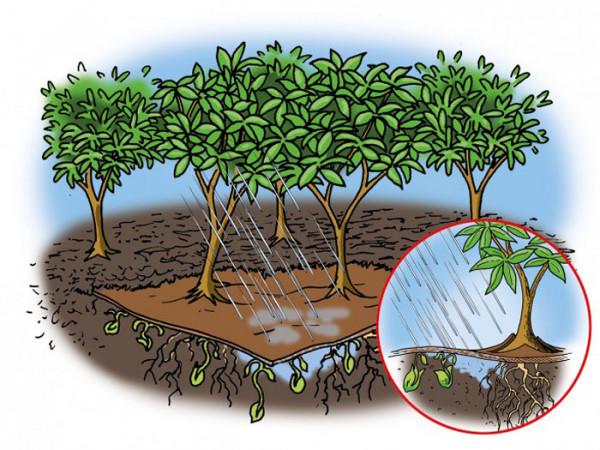 Bio Mulchvlies wasserdurchlässig